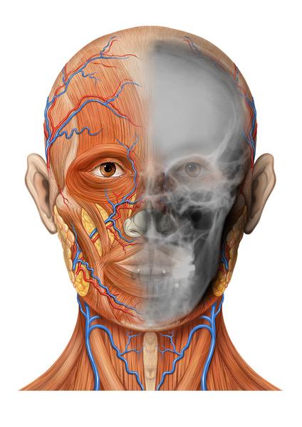 Augenarzt Dr. Arno Sailer - Anatomie
