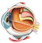 3D Auge